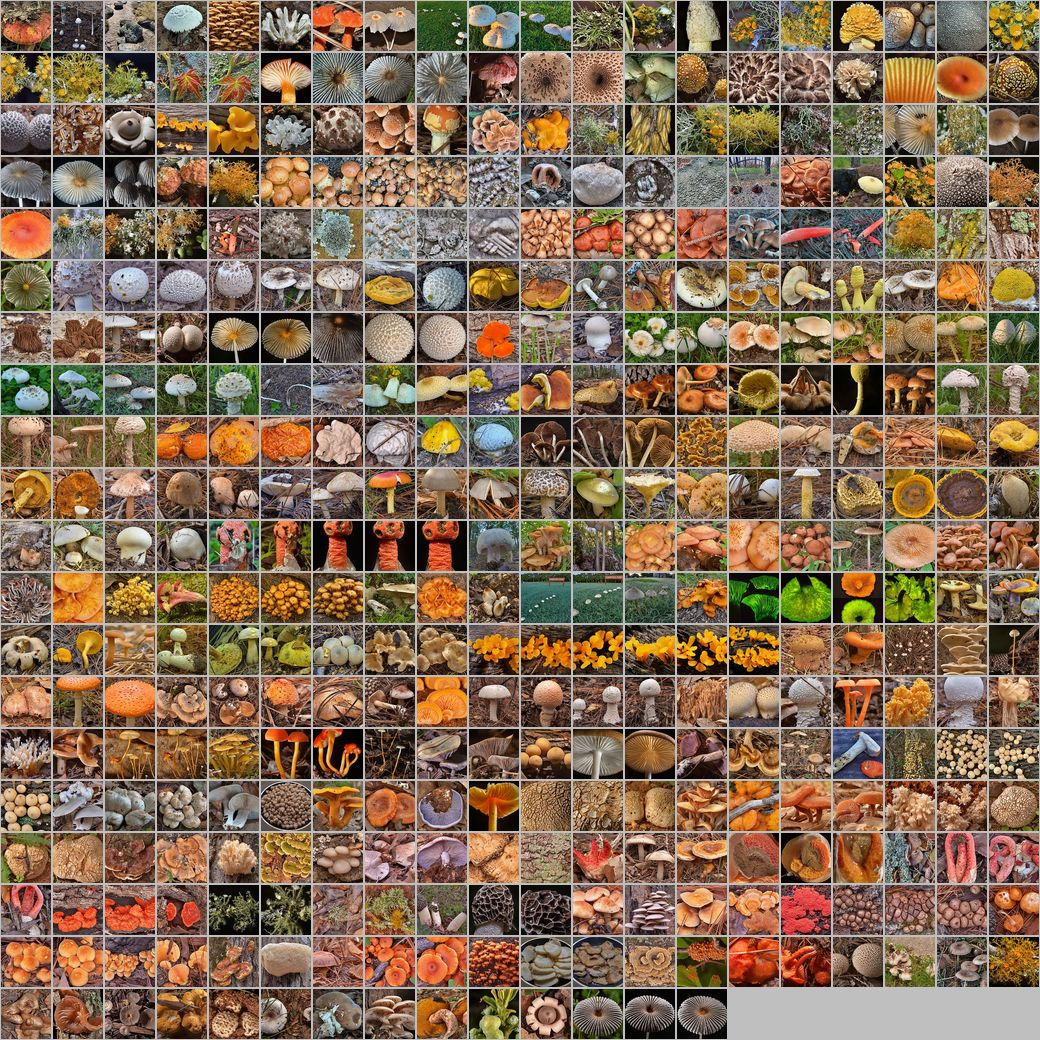 Photomontage of pictures of mushrooms in Russia. Years 2007 - 2014